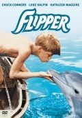 Flipper pictures.