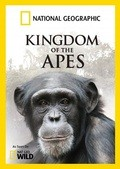 Wild Kingdom Of The Apes - wallpapers.