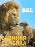 BBC: Pride pictures.