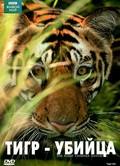 BBC: Natural World - Tiger Kill - wallpapers.