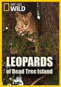 Leopards of Dead Tree Island - wallpapers.