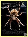 Super Spider - wallpapers.